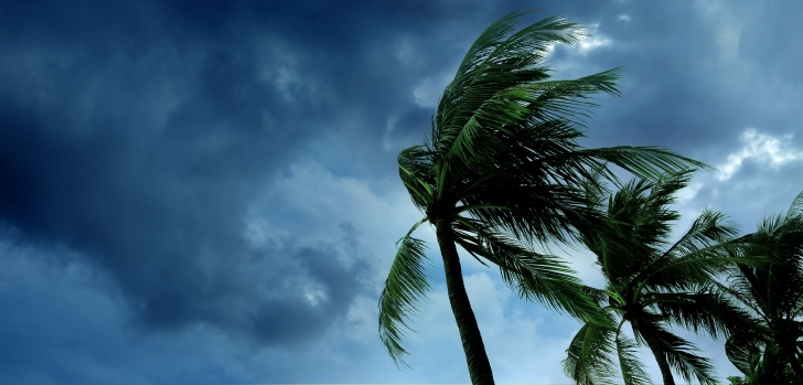Tropical trees in a storm
