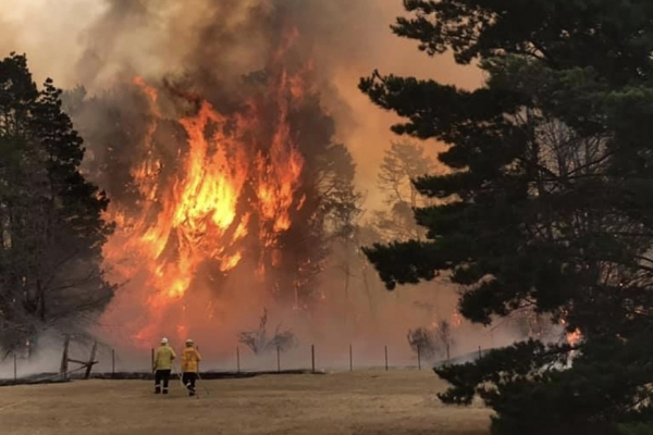 Volunteer firefighter Scott Marks (left) watches as pine trees burst into flames near a house he was protecting in Balmoral Village, New South Wales, Australia.