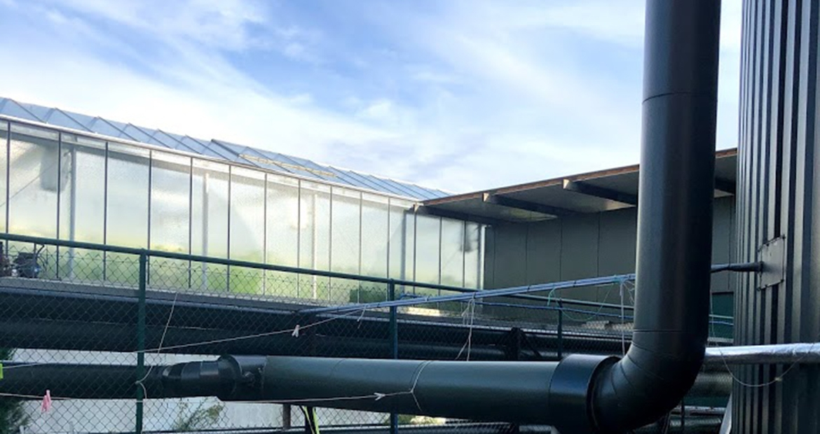 The Valegro greenhouse in Belgium uses the reliable power source of the HSK78G to flexibly meet its own energy needs.